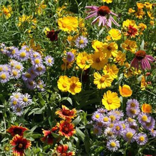 Bee Feed Seed Mixture