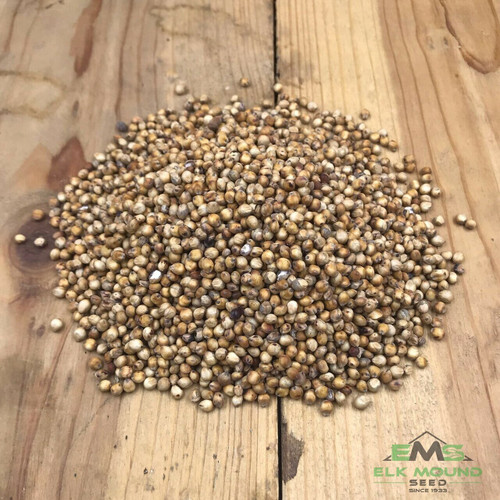 BMR (Brown Mid-Rib) Sorghum Sudangrass