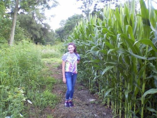 Glyphosate Tolerant Wildlife Seed Corn