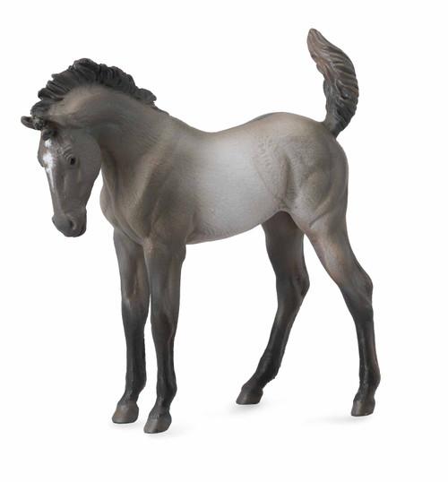 Grulla Mustang Foal