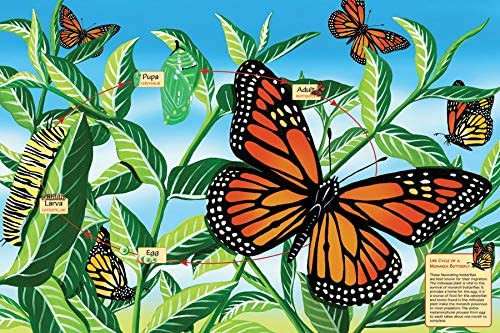 Life Cycle of a Monarch Butterfly Floor Puzzle
