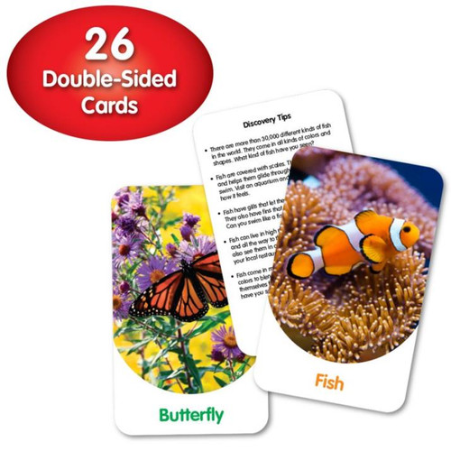 Discovery Cards - Out & About