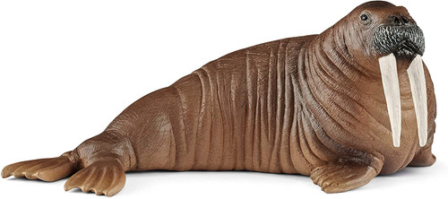 Wildlife - Walrus