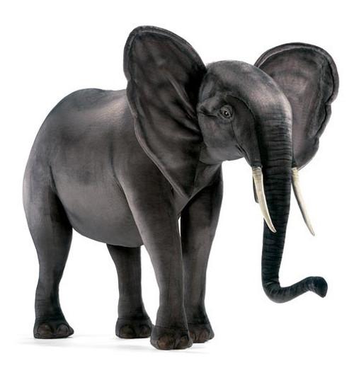 Elephant Cub