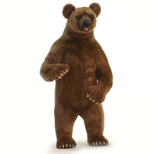 Grizzly Standing