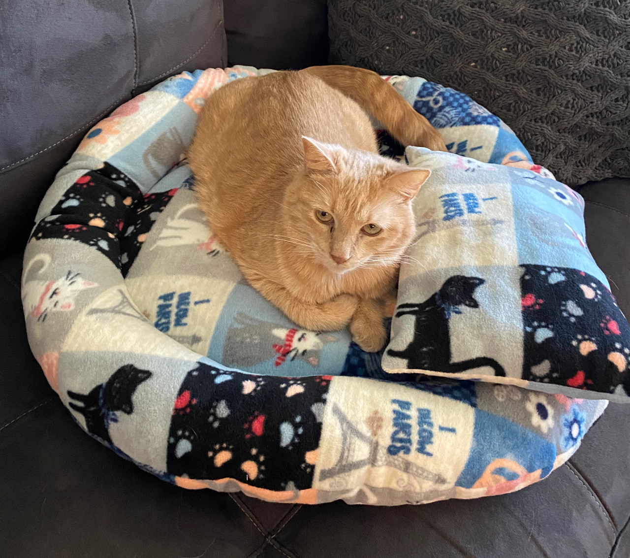 I MEOW Paris Kitty Cat Bed and Pillow