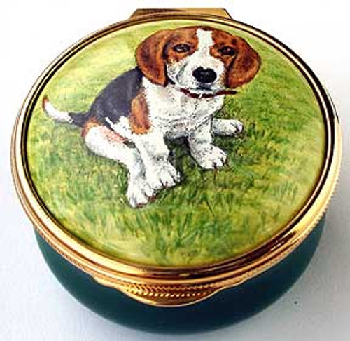 Staffordshire Beagle