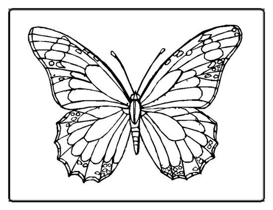 Grab Bag of 3 Random Butterflies