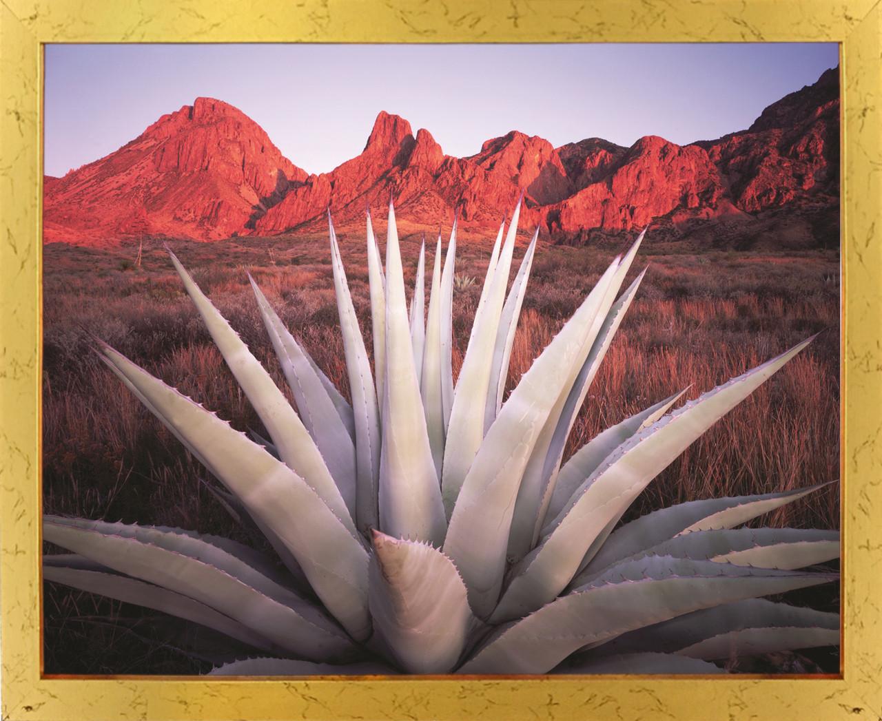 Mexico Desert Blue Agave Cactus Century Plant Art Print Poster