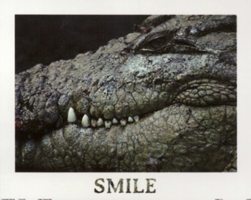 Poster Of Wild Alligator Crocodile Animal Wall Decor Art Print Poster (16x20)