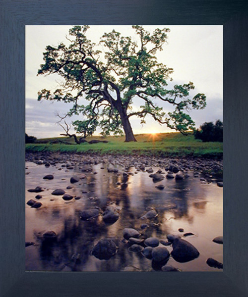 Oak Pine Creek Tree Scenery Nature Wall Decor Espresso Framed Picture Art Print (20x24)