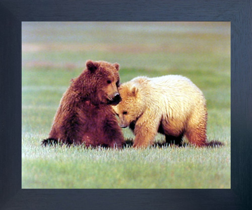 Nuzzling Grizzly Bears Wild Animal Wall Decor Espresso Framed Picture Art Print (20x24)