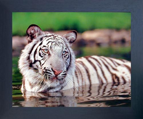 White Tiger Wildlife Animal Wall Decor Espresso Framed Picture Art Print (20x24)