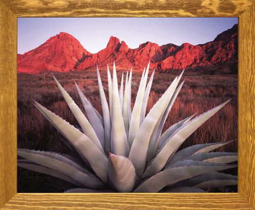 Mexico Desert Blue Agave Cactus Century Plant Brown Rust Framed Art Print Poster (19x23)