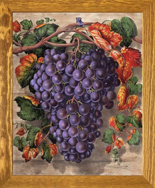 Black Grape Still Life Fruit Kitchen Wall Décor Brown Rust Framed Art Print Poster (19x23)
