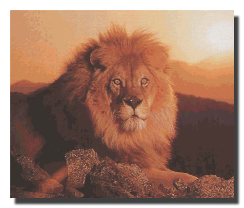 African Lion King At Sunset Poster