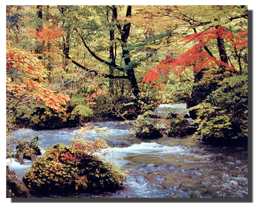 Forest Creek Poster - Autum