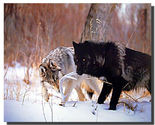Wolf Pair Art Prints