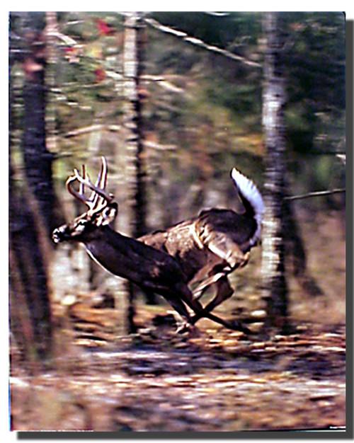 White Tailed Deer Running Poster