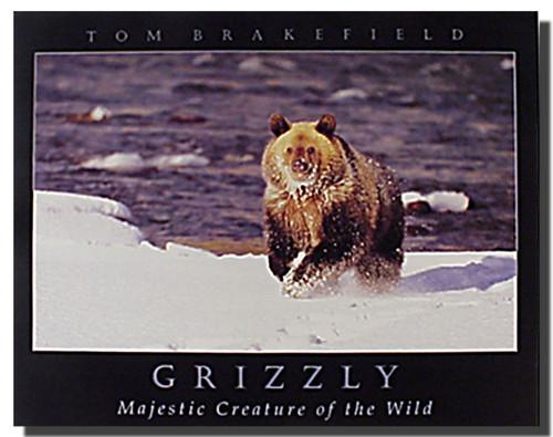 Grizzly Bear Art Prints