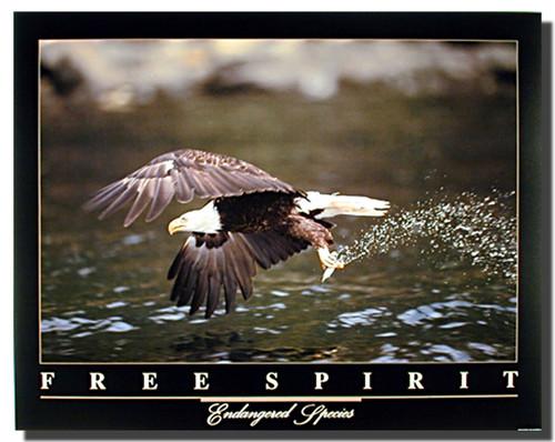 Bald Eagle Poster- Free Spirit