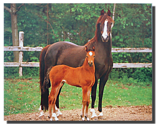 Morgan Mare and Foal Poster