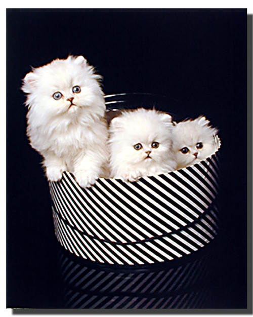 Cute Kittens Print and Poster