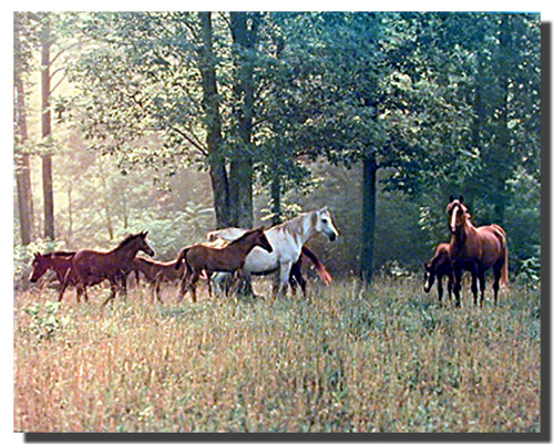 Horses in Pasture Poster