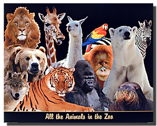 animals in the zoo pictures