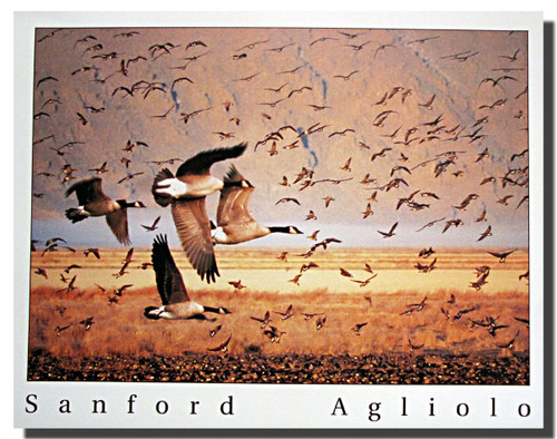 Canada Geese in Flight Posters