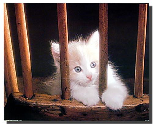 Kitten on Chair Poster