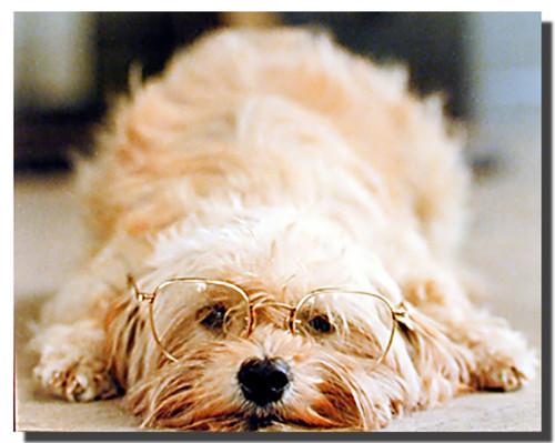Dog Poster - Glasses