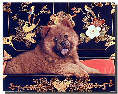 Chow Chow Puppy Poster