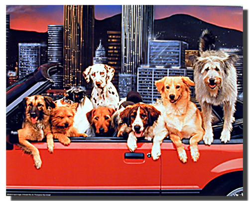 Dogs Poster - Convertible