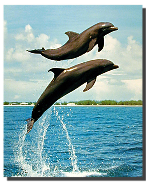 Bottlenose Dolphins Posters