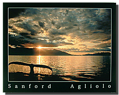 Whale Tail at Sunset Posters