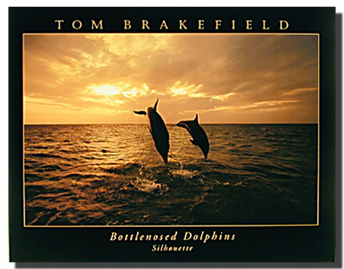 Bottlenose Dolphins Silhouettes Picture