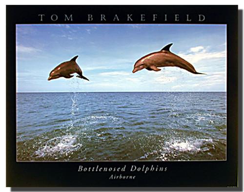 Bottlenose Dolphins Airborne Poster