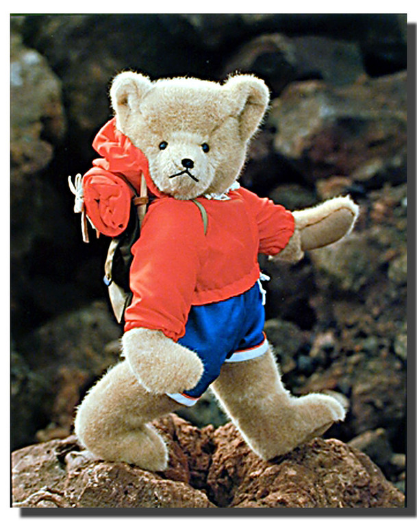 Teddy Backpacker Posters