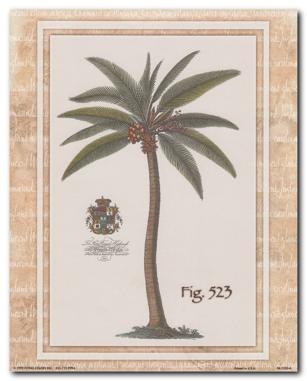 Vintage Palm Tree Fig 523 Tropical Wall Decor Art Print Poster (16x20)