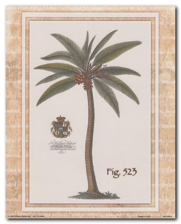 Vintage Palm Tree Fig 523 Tropical Wall Decor Art Print Poster (16x20)