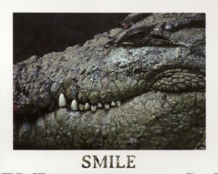 Poster Of Wild Alligator Crocodile Animal Wall Decor Art Print Poster (16x20)
