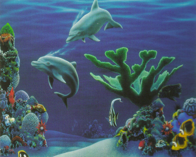 Tropical Fish & Dolphins Coral Reef Underwater Ocean Animal Wall Decor Art Print Poster (16x20)