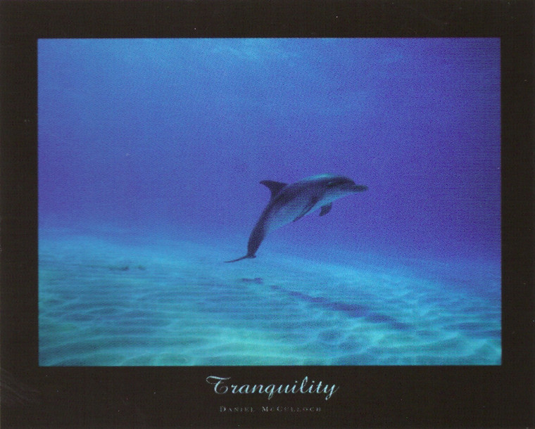 Tranquility Dolphin Underwater Ocean Animal Wall Decor Picture Art Print Poster (16x20)