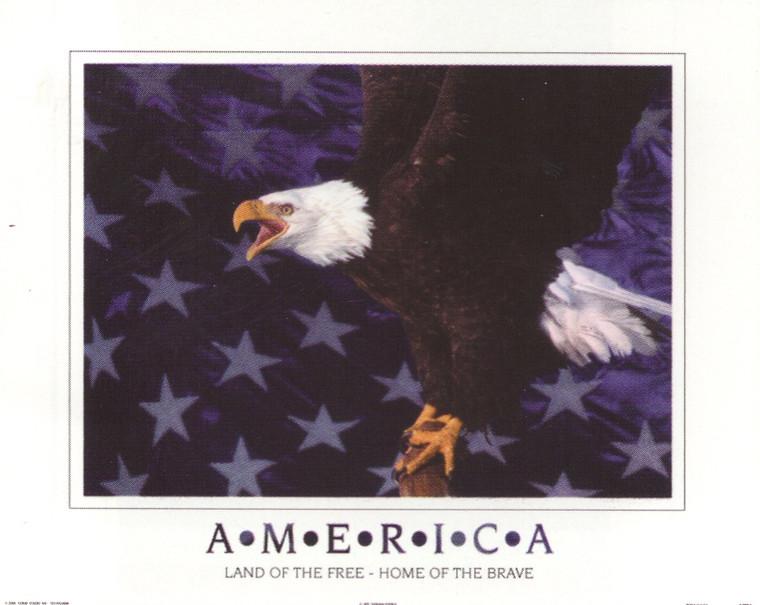 American Bald Eagle Flying Wall Decor Art Print Poster (16x20)