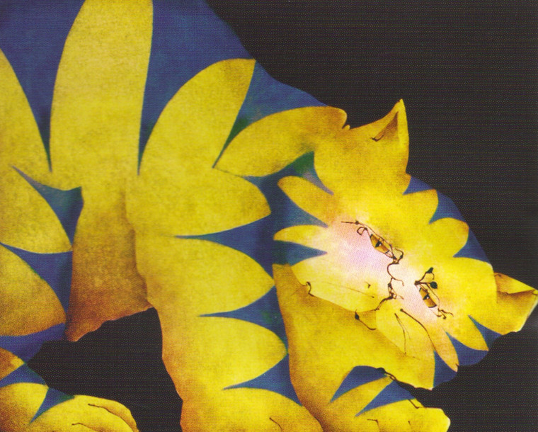 Yellow Fat Cat Room Wall Decor Art Print Poster (16x20)