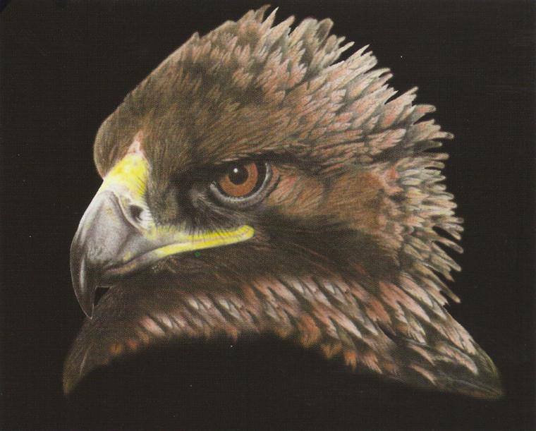 American Bald Eagle Bird Picture Wall Decor Art Print Poster (16X20)