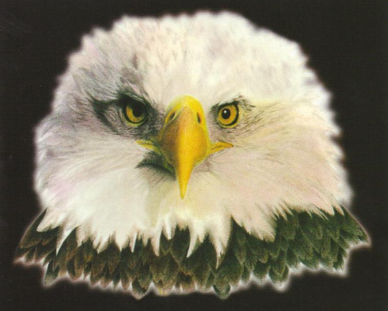 American Bald Eagle National Bird Motivational Wall Decor Art Print Poster (16X20)