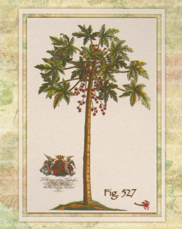 Vintage Tropical Palm Tree Fig 527 Contemporary Wall Decor Art Print Poster (16x20)