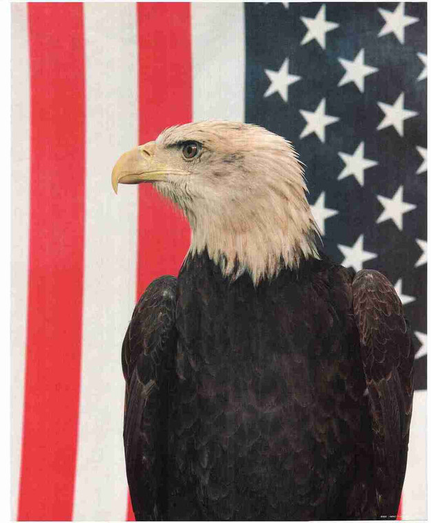 American Flag Bald Eagle Close UP Wall Decor Art Print Poster (16x20)